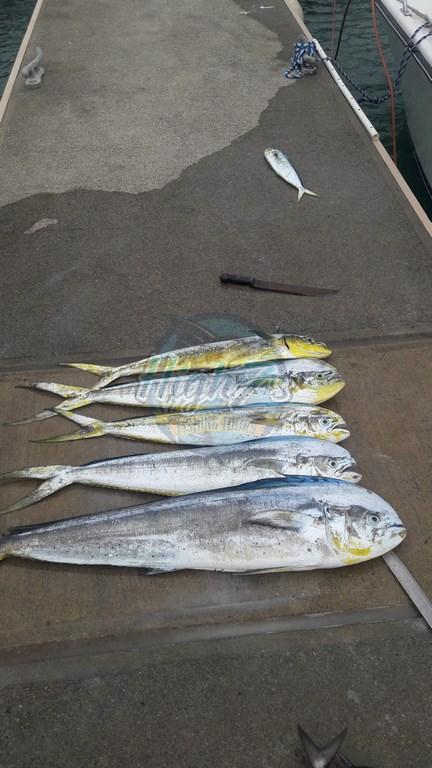 Clientes Felices - Happy Customers - Fishing Tours - Tour de Pesca - Puerto Plata - 004